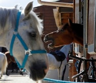 Se desconocen las circunstancias en las que el menor cayó del caballo.