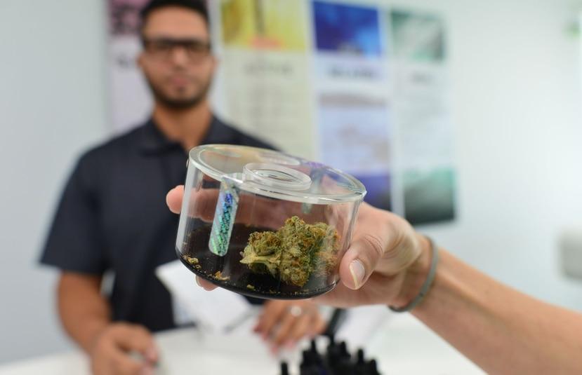 La Feria de salud ofrecerá orientación sobre el cannabis medicinal, una alternativa que ha probado ser efectiva y segura para muchas dolencias.
