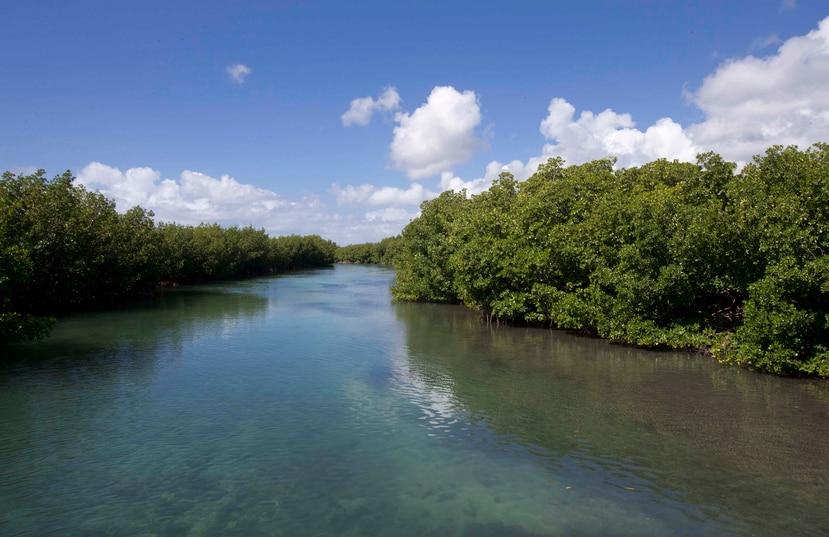 Desembocadura de los canales del humedal Los Machos, en la antigua base Roosevelt Roads en Ceiba.