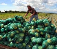 Aceleran el acceso tecnológico de la agricultura durante la pandemia