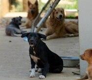 Los animales realengos –mayormente perros y gatos– constituyen un serio problema social y de salud pública para el que no existe un protocolo uniforme de manejo. (GFR Media)