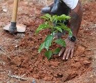 Agricultura aumentará los vales para abono a los agricultores de café