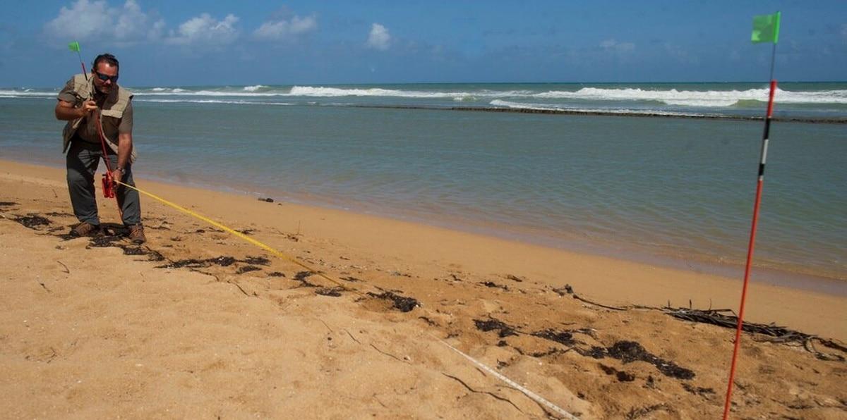 Para poner en práctica la guía, el oceanógrafo Jorge Bauzá hizo un transecto de banda o lineal  en la playa de Piñones, Loíza.