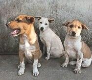 Se estima que en la isla hay cerca de 250,000 animales abandonados a su suerte en las calles del país.