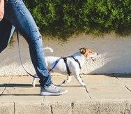 Los 10,000 pasos equivalen aproximadamente a cinco millas y fácilmente puedes alcanzarlos saliendo a caminar con tu perro en las tardes.