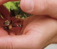 Una libélula podría ser el dron más pequeño del mundo