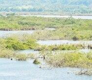 La secretaria de Agricultura dijo que parte de las tierras afectadas por las inundaciones son usadas por 34 agricultores para la producción de pasto, ganadería, cultivo de ornamentales y frutos menores. (Archivo / GFR Media)
