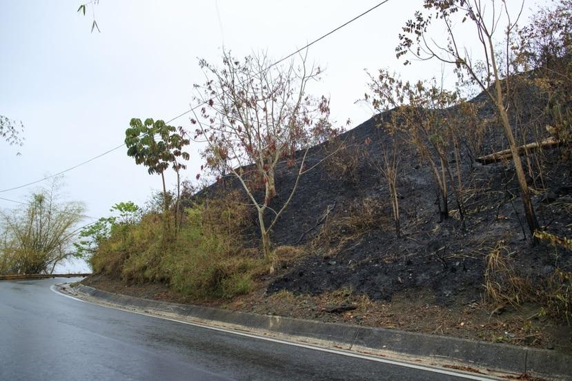 Una de las carreteras afectadas por el incendio forestal en Gurabo tras las lluvias.