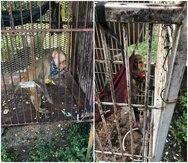 Dos monos patas fueron ocupados durante una orden de allanamiento en la casa de un oficial correccional en Río Grande.