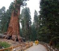 Incendios forestales en parques de secuoyas de California.