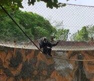 El DRNA compartió en las redes sociales unas imágenes para demostrar el estado de los animales en el zoológico de Mayagüez. (DRNA / Twitter)