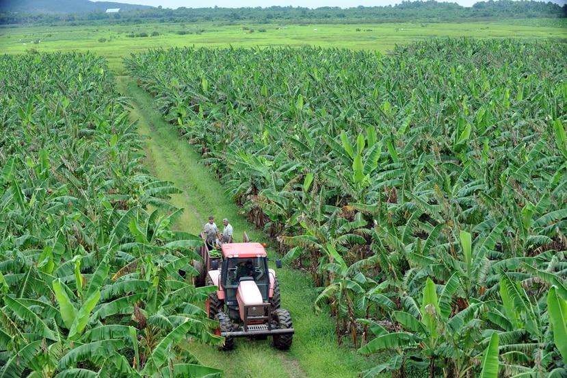El USDA informó que en octubre del 2020 Puerto Rico recibió $2,336,486 para 11 empresas o productores agrícolas, como parte del Programa de Donativos de Valor Añadido.