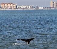 La cola de una ballena fotografiada frente a la costa de Nueva Jersey el 23 de septiembre del 2020.