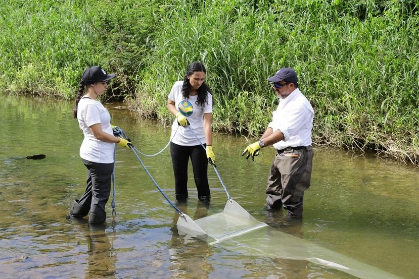 """Para colectar microplásticos en el agua, los voluntarios del Programa del Estuario de la Bahía de San Juan utilizan una herramienta conocida como """"manta trawl"""" que les prestó la Agencia federal de Protección Ambiental (EPA, en inglés). (Suministrada)"""