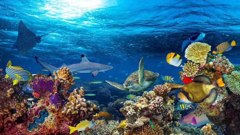 Paisaje submarino de arrecifes de coral. (Shutterstock)