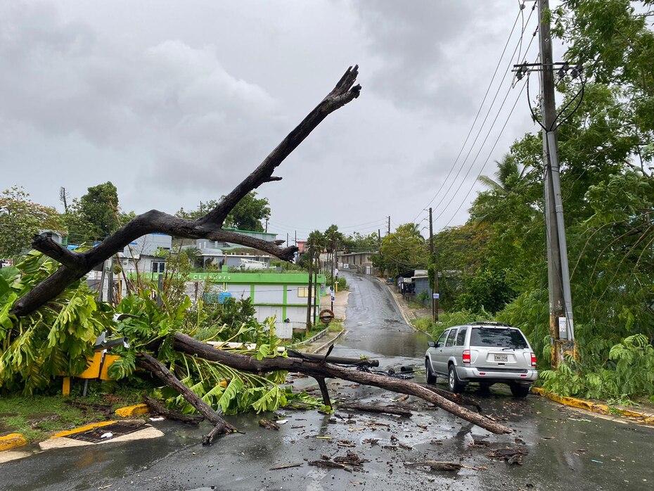 La tormenta Isaías también provocó que árboles cayeran en la carretera en Caimito, San Juan.
