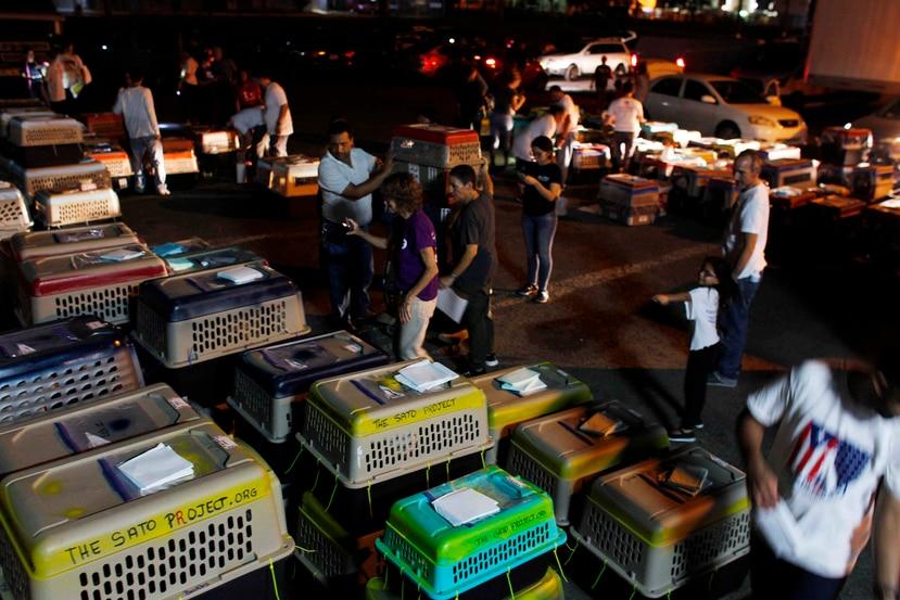 Voluntarios organizan a decenas de perros para ser enviados a Estados Unidos. (AP / Ricardo Arduengo)