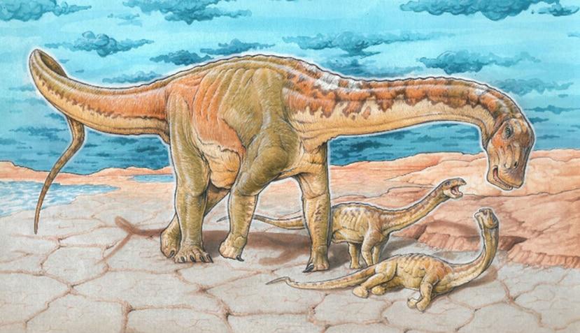 Este dinosaurio pertenece al grupo de los saurópodos y medía unos 40 pies de longitud. (mef.org.ar)