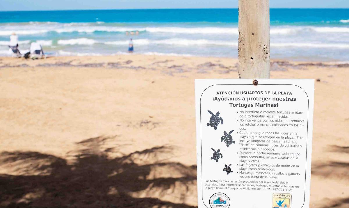 El DRNA y grupos comunitarios se preparan para la llegada de tortugas a la isla