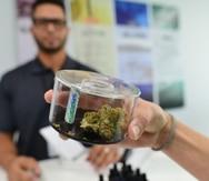 Urgen a la Legislatura acción para proteger la libertad y el empleo de los pacientes de cannabis