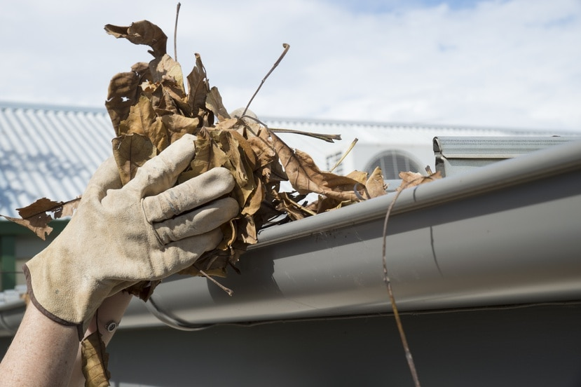 Limpiar el agua empozada de los techos y los desagües evitará filtraciones.