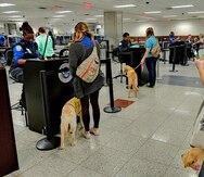Aeropuerto de Orlando se une a aerolíneas y cambia reglas para animales de servicio