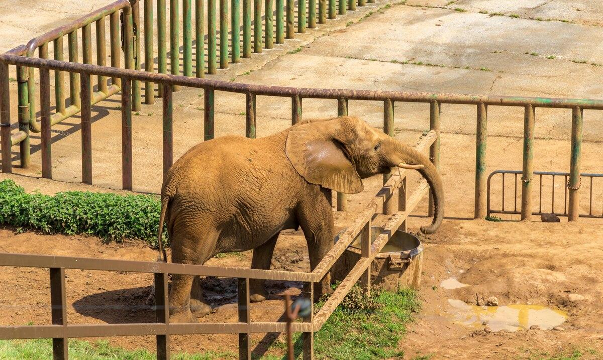 Elefanta mata de un golpe a cuidador en zoológico en España