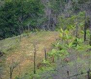 Cambio climático y la reforestación de Puerto Rico