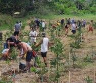 En la foto, cerca de 100 voluntarios colaboraban en  2018 en la siembra de 500 árboles en la Hacienda La Esperanza en Manatí.