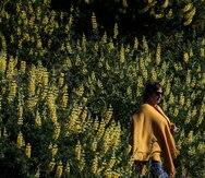 Las comunidades mapuche de Chile guardan visiones únicas sobre el significado de los eclipses solares