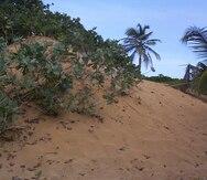 Un grupo de la UPR evalúa daños a dunas de la costa norte tras María