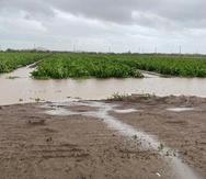 La tormenta Laura causó $5.5 millones en pérdidas en la agricultura de Puerto Rico