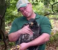 Leopoldo Miranda sujeta un águila calva juvenil. (Suministrada)
