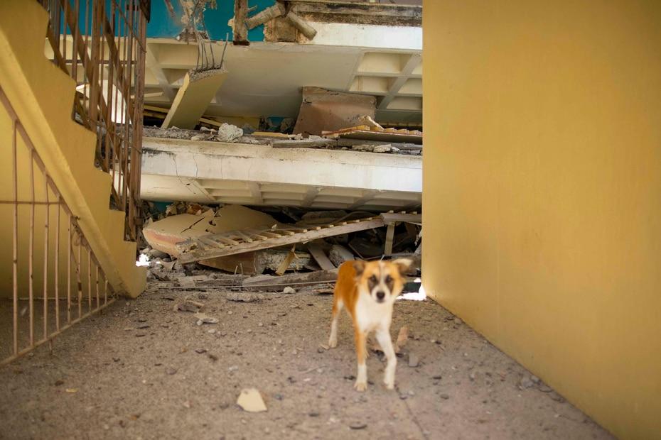 """González dijo que """"Hasta este momento, tenemos 11 escuelas, de 73 que se han inspeccionado, y que han sufrido daños""""."""