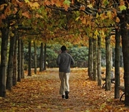 A man jogs through trees with colored leaves on November 6, 2008. Autumn brought a rainy day to wide parts of the country.    AFP PHOTO    DDP/CLEMENS BILAN    GERMANY OUT