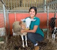 Alumnos del RUM impulsan industria de carne de cordero en Puerto Rico