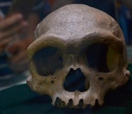 El cráneo fue descubierto en la década de 1930 en la ciudad de Harbin, en la provincia china de Heilongjiang, el cráneo permaneció oculto (guardado por la familia del hombre que lo encontró) hasta 2018, cuando fue donado a la Academia de Ciencias de China.
