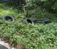 Varios neumáticos en el bosque nacional El Yunque.