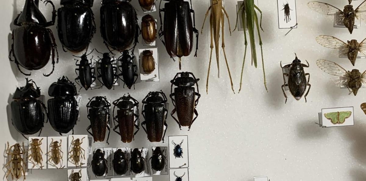 Los estudiantes construyeron una colección de 20 especies que representaran cinco órdenes de insectos.