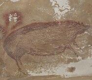 Una pintura de un cerdo en una cueva indonesia puede ser el arte más antiguo conocido de humanos.