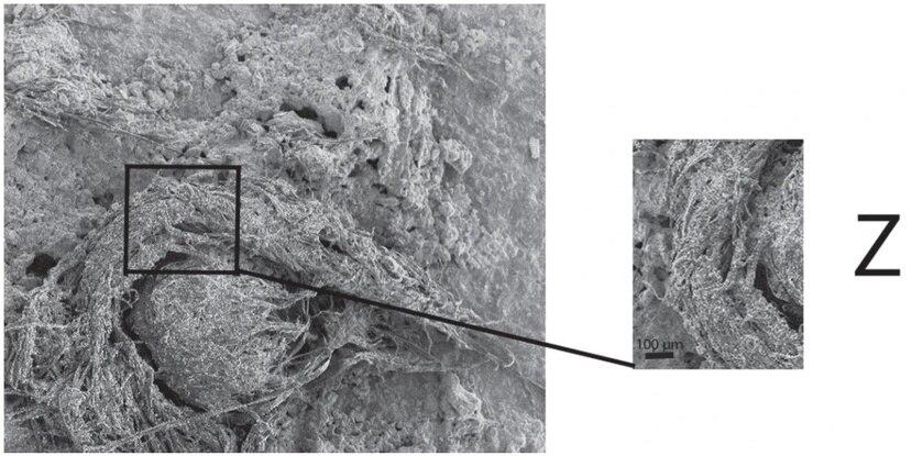 Imagen de la cuerda neandertal. (Scientific Reports)