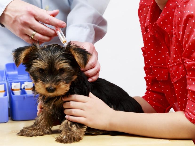 Entre vacunas y servicios se proveerá desde vacuna contra la rabia hasta servicio de corte de uñas y limpieza de oídos.